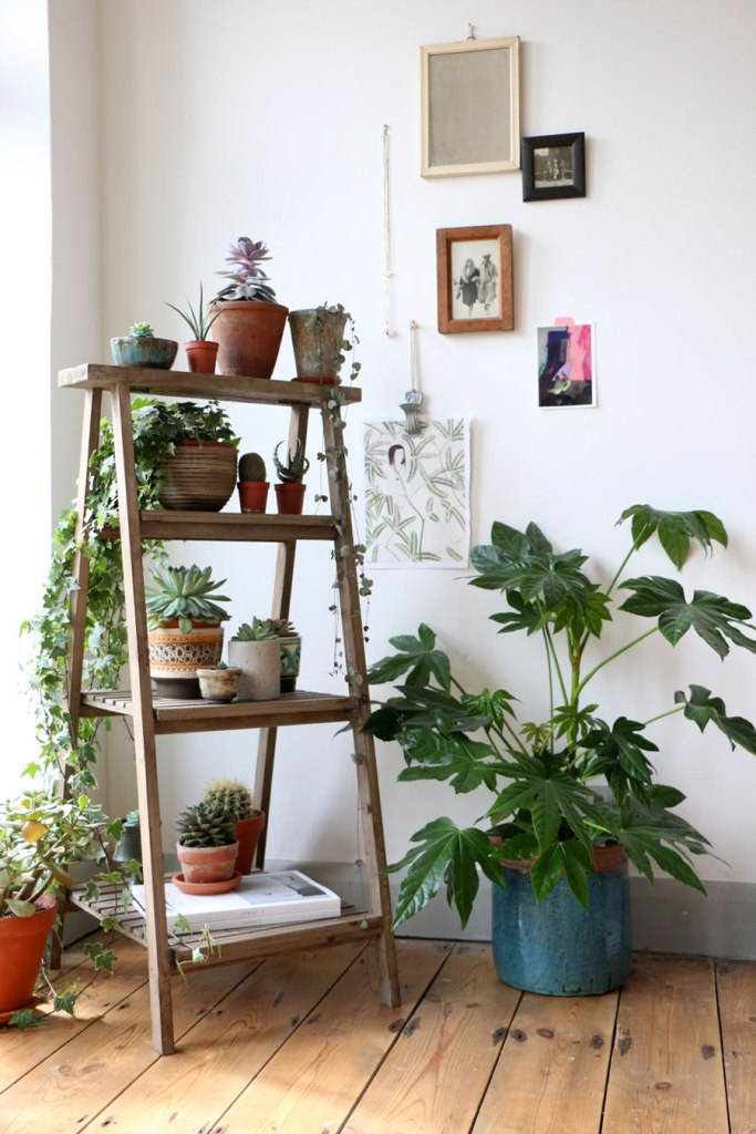 How-to-display-indoor-plants-10